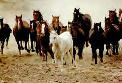 save the wild mustangs