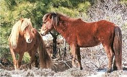 please help save the wild mustangs
